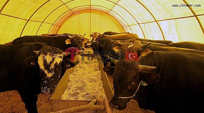 Nevşehir'de Kurban Kesim Alanları Belirlendi