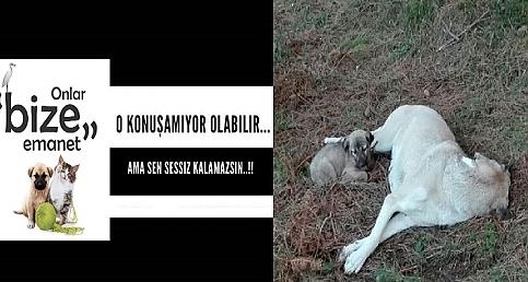 Acıgöl ve Gülşehir'deki Köpek Vakası Sonrası Hayvan Hakları Temsilcilerinin Basın Açıklaması